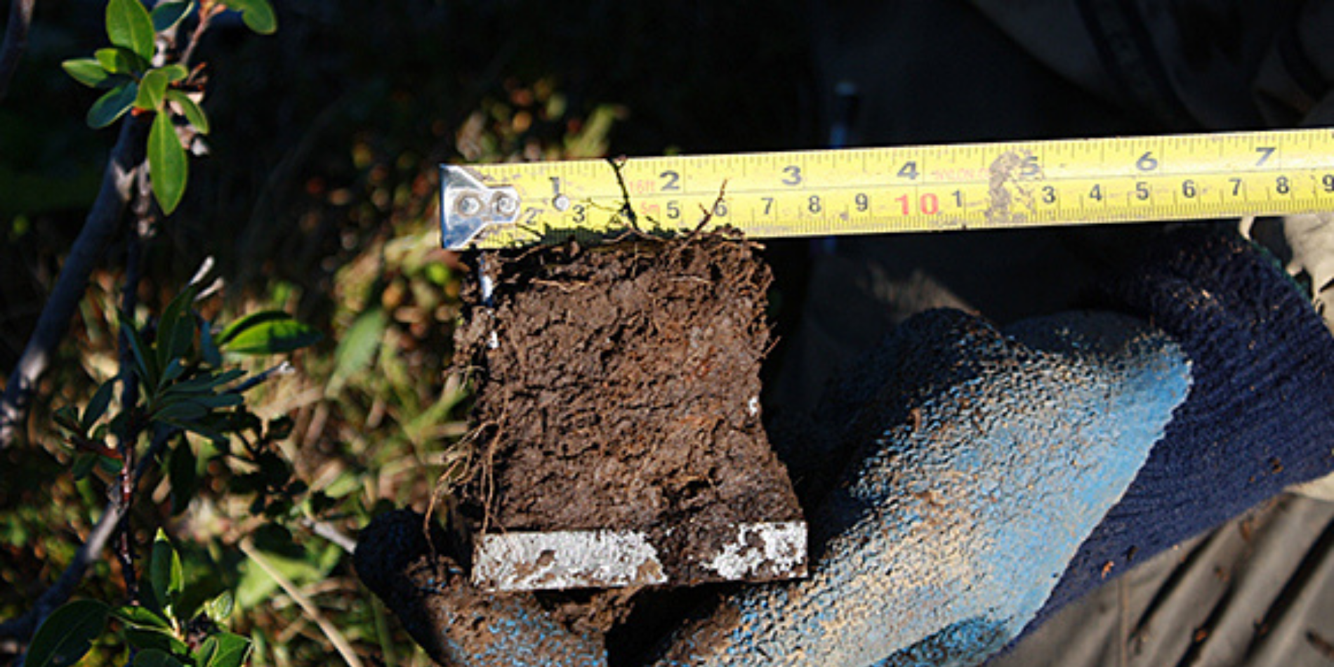 A measuring tape is held up to a hunk of dirt
