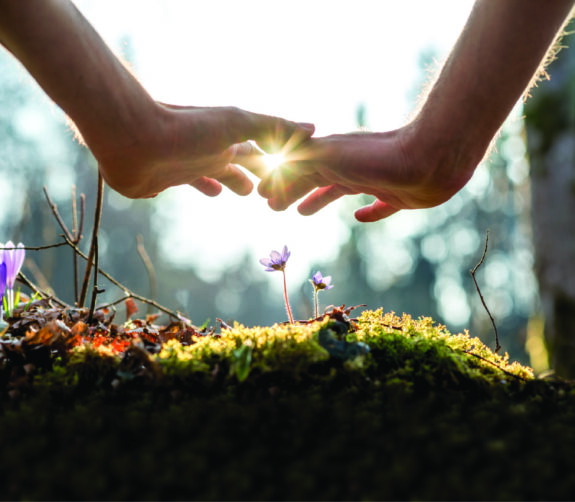 Two hands touch backlit by the sun above a pile of moss